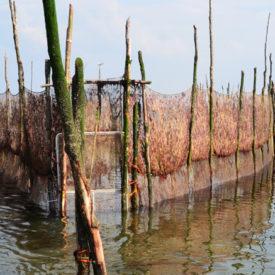 Weervisserij op de Schelde