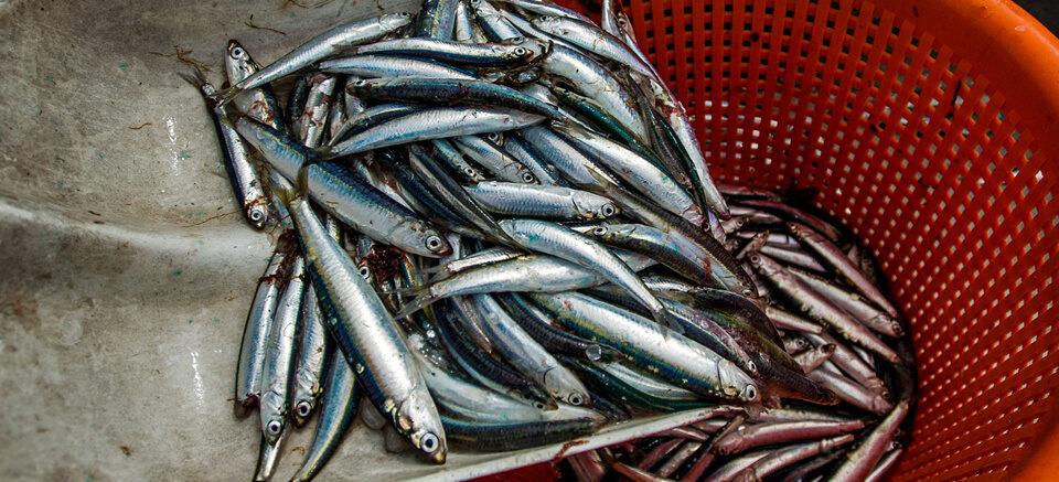De vis en vangst